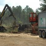 Processing Timber