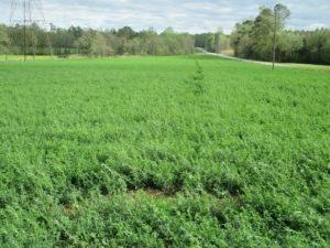 Alfalfa Field Harnett County NC