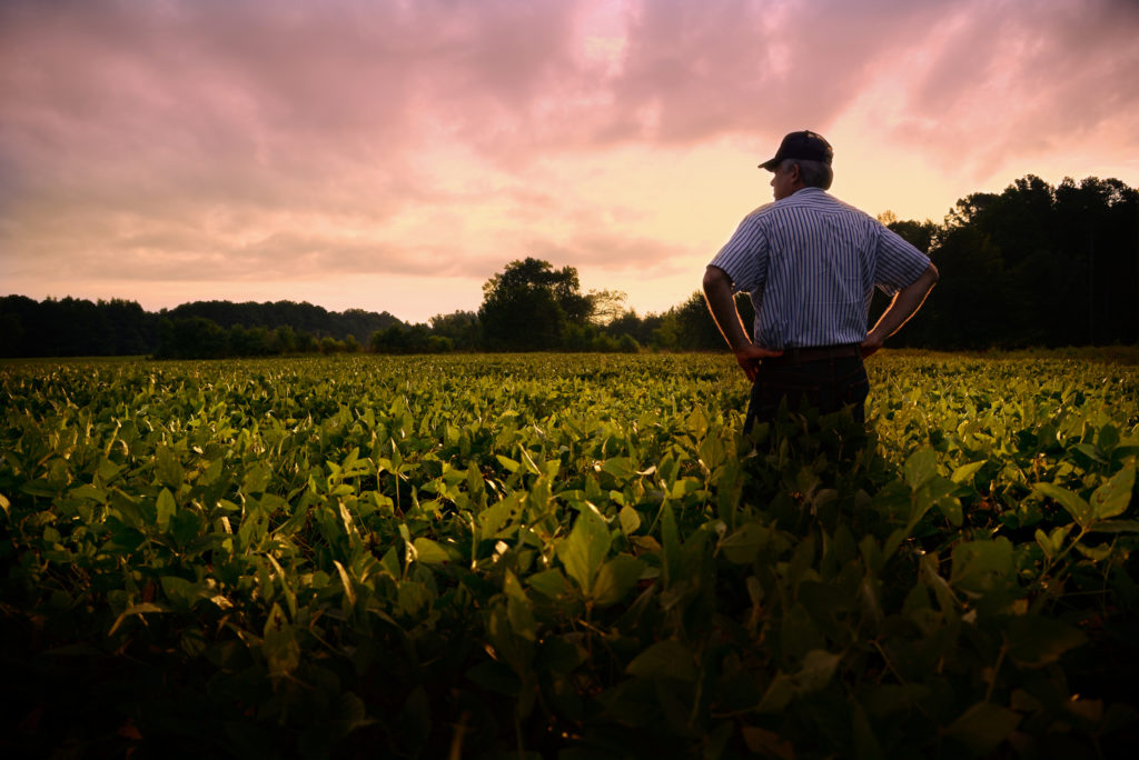 Image of Farmer out standing in his soybean field